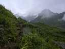 Цветы и травы Кедарнатха