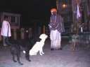 Саду в храме дружит с двумя собаками, сначала  кормит их, потом ест сам