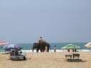 слон на пляже Гоа